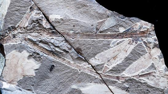 Fossils of Ancient Australasian Trees Found in Patagonia