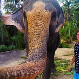 """DC Mansion Murder Suspect At Large; ISIS Threatens Priceless Artifacts; Elephant Takes  """"Elphie"""" Selfie with Student"""