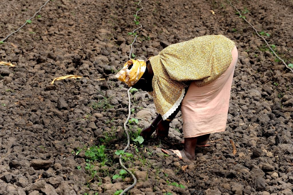 Climate-linked insurance a boon for poor farmers