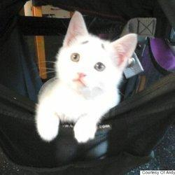 'Concerned Kitten' Just Wants To Know How Your Day Is Going