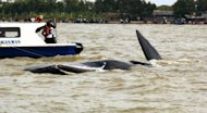 This photograph released by Jakarta Animal Aid Network shows rescuers and navy divers in Indonesia helping a sperm whale return to the sea after it was stranded in shallow waters off the coast of West Java province for four days