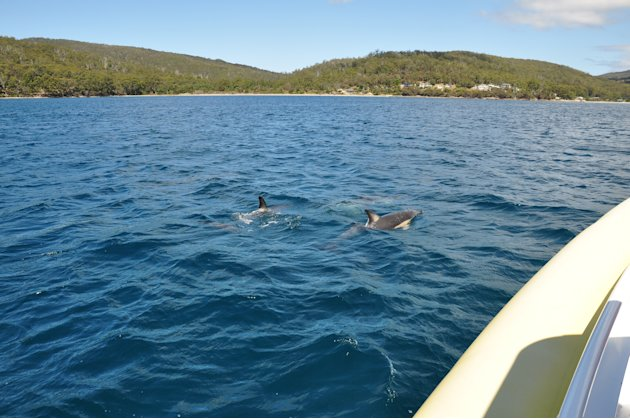 Take a boat ride and you may be rewarded with a view of dolphin schools playing outrider to your boat. Sometimes they come out in the dozens - and even in the hundreds - which is quite a sight indeed!