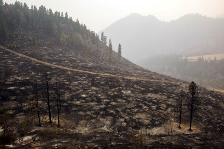 This Year's Wildfires May Change Western Forests Forever—and Not for the Good