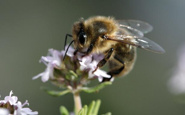 Rapid Fire Evolution; Why Pesticides Are Killing the Bees