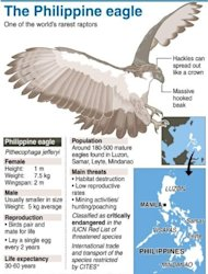 Graphic fact file on the Philippine eagle, one of the world&#39;s rarest raptors. The first Philippine eagle bred in captivity has sired her first offspring, conservationists said Thursday