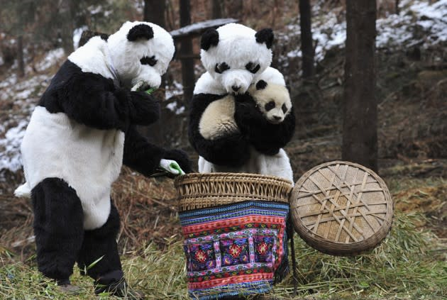 This Is One for the Panda Baby Book