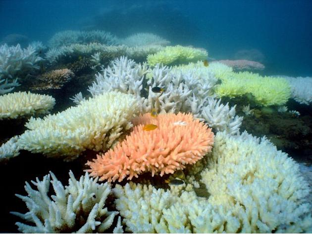 "The Great Barrier Reef is now formally considered to be in ""poor"" health by scientists, with overall coral cover declining by 15 percent since 2009 due to cyclones and floods, pollution and"