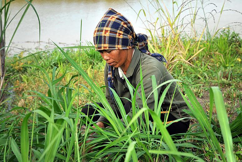 A Wild Solution to Hunger: Farming Native Plants