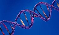 Genetic Map Gives Hope On Cancer Treatment