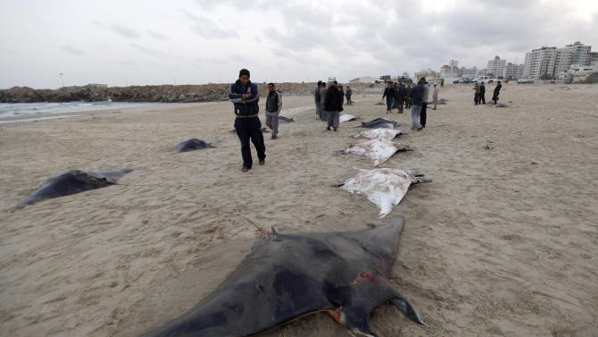 """In this Saturday, March 9, 2013 photo, Palestinian men look at dozens of devil rays lined up on the Gaza beach in Gaza City. Gaza cuisine is Mediterranean-based, relying on olive oil, fresh vegetables, herbs and grains. """"The Gaza Kitchen"""" is being praised by celebrity chefs like Anthony Bourdain for showcasing a unique, fiery variation of Mediterranean cuisine kept alive through blockade, war and impoverishment. (AP Photo/Hatem Moussa)"""