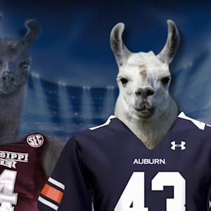 The Feed: What If Llamas Got Loose On The Gridiron?