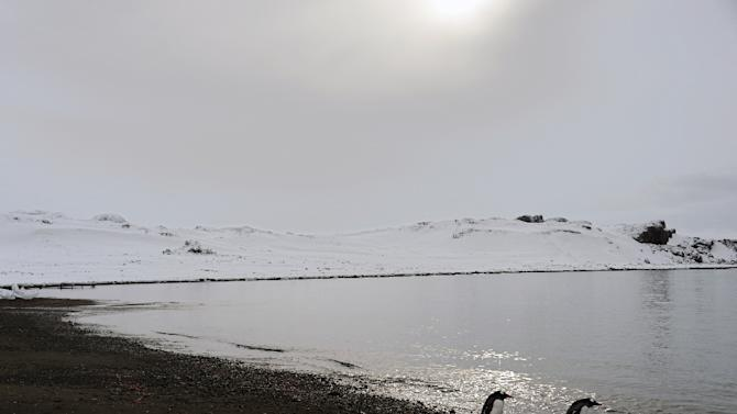 Penguins walk along the shore on King George Island, Antarctica, on March 13, 2014