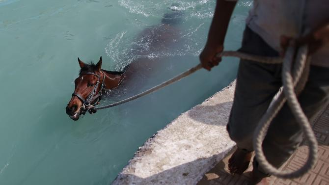 A groom pulls his horse through the equine pool after working out on the track during early morning workouts for the upcoming Derby race in Mumba