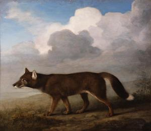 The painting of a dingo by British animal painter George …