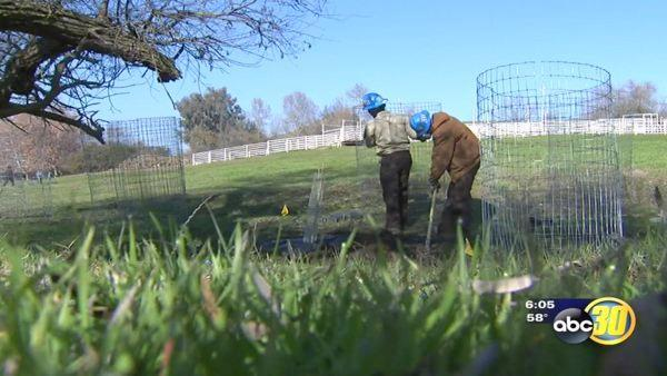 Volunteers plant trees on MLK Junior day of service