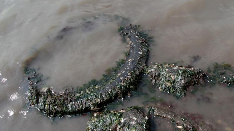 In this Wednesday, Aug. 22, 2012 photo, oysters grow on a discarded tire at Soundview Park in the Bronx borough of New York. Marine scientists, planners and government officials say millions of mollusks living in waters off New York and other cities could go a long way toward cleaning up America's polluted urban environment. The lowly oyster and other shellfish can slurp up toxins and eliminate decades of dirt. (AP Photo/Mary Altaffer)