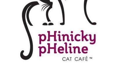 Virginia Could Get its Own Cat Cafe