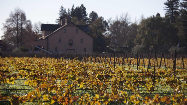 Massive Napa do-over prompts grape plant shortage
