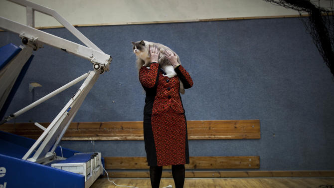 In this June 14, 2012 photo, Natalia Lerner, who immigrated to Israel in 1991 from the city of Tyumen in Siberia, presents her cat to the judges of a cat competition in the central Israeli city of Holon. Cats are prominent in Russian culture, and most members of Israeli cat societies are immigrants from the former Soviet Union. (AP Photo/Oded Balilty)