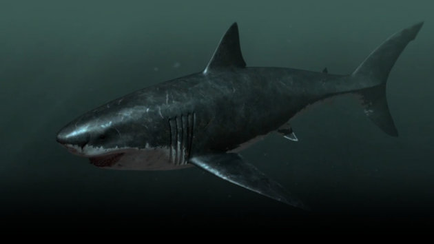 This Nearly 67-Foot Shark Still Exists Off the Coast of South Africa