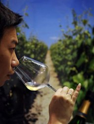 A visitor samples some French white wine during the Vinexpo Asia-Pacific trade fair in Hong Kong, on May 30. China's rapid emergence as a major international wine market has sparked intense debate among growers about how best to pair their wines with the country's rich array of culinary delights