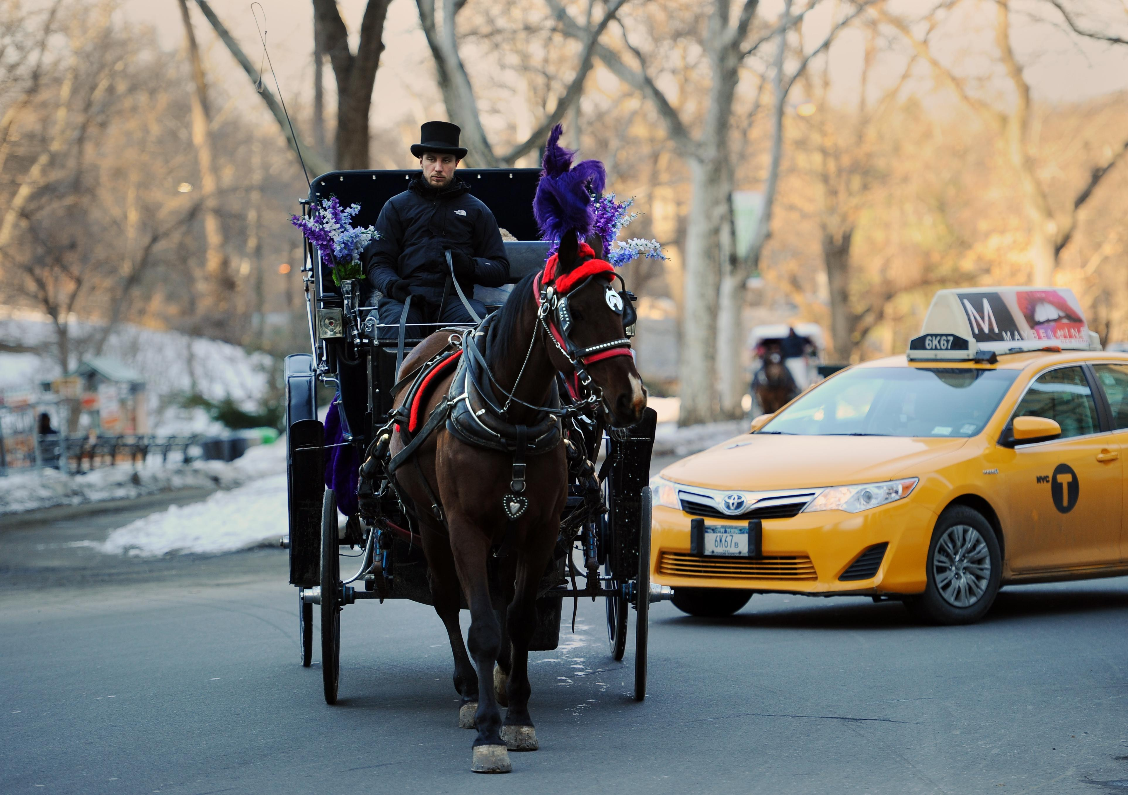 Plan to restrict horse-drawn carriages in New York collapses
