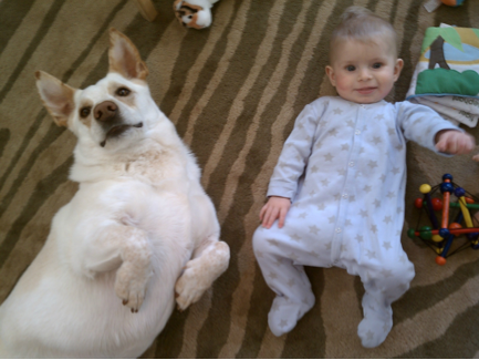 How a Corgi Interacts With a Baby