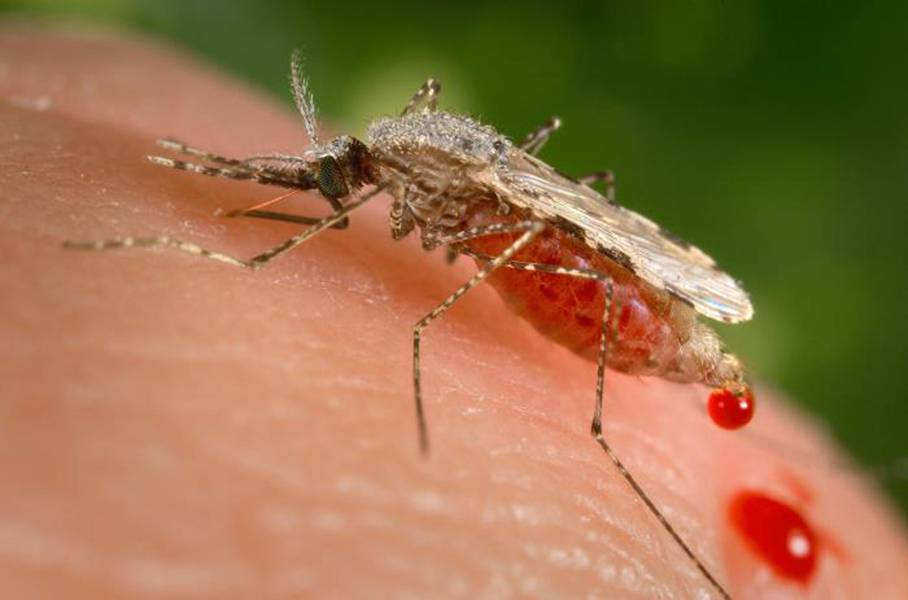 Using new gene drive to create malaria-resistant mosquitoes