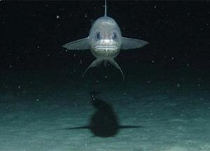 Into the Deep: Expedition Seeks Life in Ocean Trench