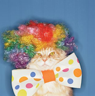 Cat with clown wig and bow tie, Jan 13, p93