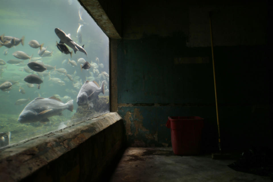 Fish swim past a portion of the an exhibit that was flooded to the ceiling during Superstorm Sandy at the Wildlife Conservation Society's New York Aquarium in Coney Island, New York, Monday, March 25, 2013.  (AP Photo/Seth Wenig)