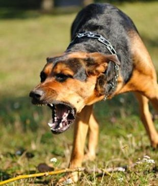 What to do if man's best friend attacks