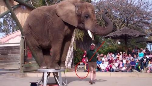 The Worst U.S. Zoos for Elephants, According to An Animal Rights Report