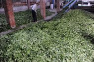 A local farmer is seen sorting fresh tea leaves at a factory in Taoyuan, northern Taiwan. The island's tea industry peaked in 1973 when it produced 28,000 tonnes of tea leaves, with 23,000 tonnes being exported, but since then the sector has been gradually losing its competitiveness due to labour shortages, rising labour costs and the appreciation of the local currency