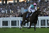 Frankel (pictured in 2011) is due to run his 14th and last race at Ascot on October 20 in the mile and a quarter Champion Stakes