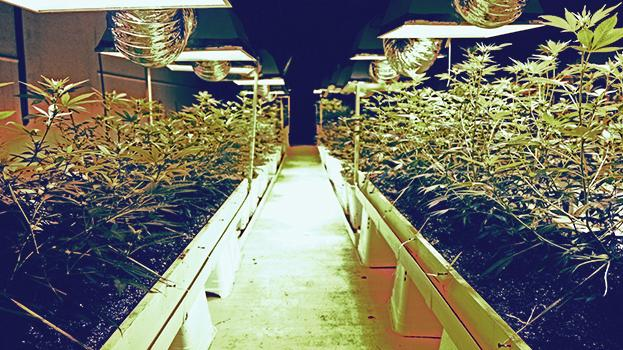 Don't be fooled: The marijuana business is hard work.