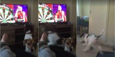 Watch This Adorable Dog Try to Fetch Darts Thrown on TV