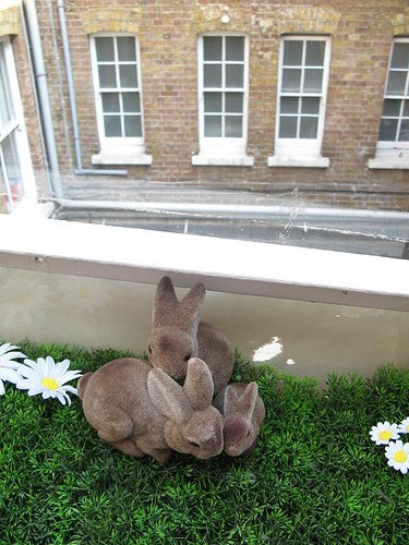 Wallacespace bunnies