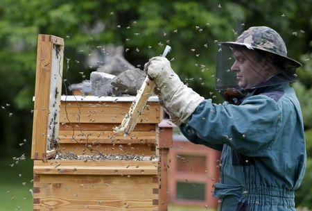 Czech teacher battles bee-killing disease with hot hive
