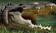 Crocodile Attack: 'Human Remains' Found