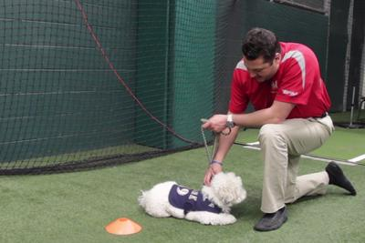 Hank the Brewers dog fails adorably at K9 security training