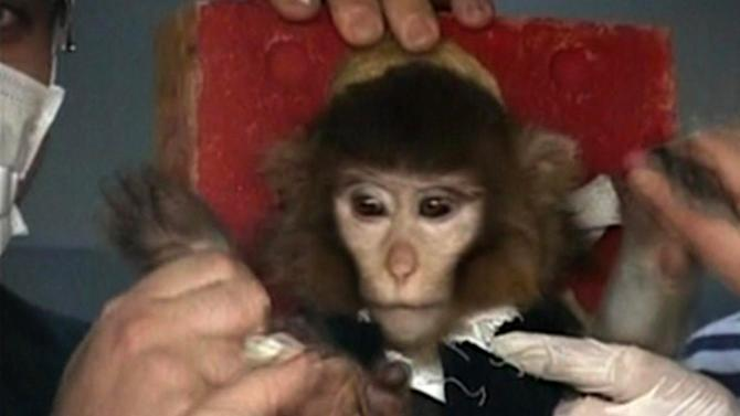 In this undated image taken from AP Television, scientists in Iran surround a monkey ahead of a space launch. Iran said it had successfully sent the monkey into space on Monday, Jan. 28, 2013, describing the launch as another step toward Tehran's goal of a manned space flight. According to a brief report on state TV, the monkey was sent up to a height of 120 kilometers (72 miles) on board a rocket dubbed Pishgam, or Pioneer in Farsi. (AP Photo/AP Video)