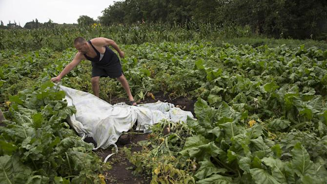 A man covers a body with a plastic sheet near the site of a crashed Malaysia Airlines passenger plane near the village of Rozsypne, Ukraine, eastern Ukraine Friday, July 18, 2014. Rescue workers, policemen and even off-duty coal miners were combing a sprawling area in eastern Ukraine near the Russian border where the Malaysian plane ended up in burning pieces Thursday, killing all 298 aboard. (AP Photo/Dmitry Lovetsky)