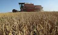 UN Raises Alarm Over Global Food Prices
