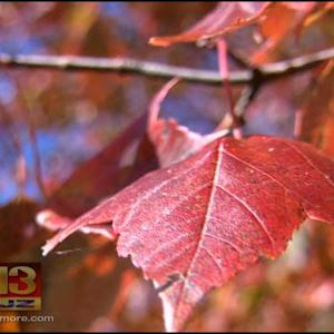 Autumn Falls On Central Maryland