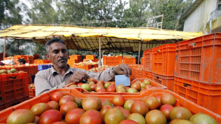 In this July 31, 2011 photograph, a man sorts tomatoes at a wholesale vegetable market at Solan district of Himachal Pradesh 200 miles (320 kilometers) north of New Delhi, India. For the tomato farmers of northern India, trucking produce to New Delhi's wholesale vegetable market is a race against time. India, the world's second largest producer of vegetables and fruits, loses an estimated 40 percent of that harvest to lack of cold storage and inadequate infrastructure. India's food minister calls the rotting food shameful in a nation where hunger is so prevalent that nearly half the children are malnourished and underfed. (AP Photo/Mustafa Quraishi)