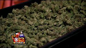 Supporters Square Off With Law Enforcement On Marijuana …