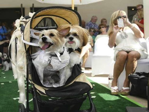 Dogs get 5 000 wedding with all the amenities the sideshow yahoo