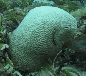 Surprising Coral Diversity Rivals Great Barrier Reef