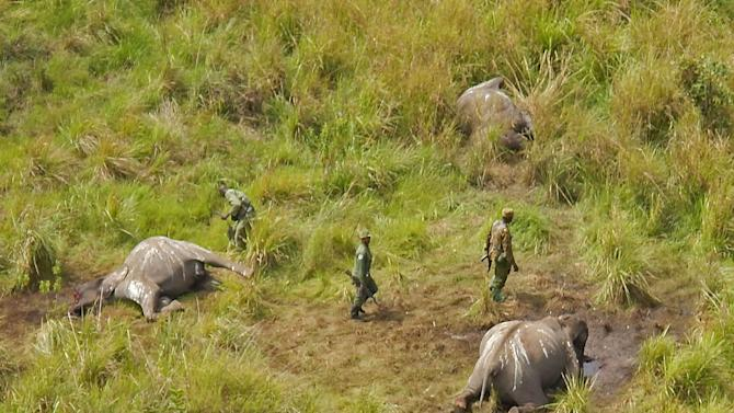 In this photo taken on Tuesday, May 20, 2014, Park ranges stand near the remains of three elephants that were killed by poachers in the Garamba National Park, situated in the Democratic Republic of Congo. At least 68 elephants, some 4 percent of the population of one of Africa's oldest parks, have been slaughtered by poachers over the last two months using chain saws and helicopters, warned the non-profit group managing the park. The Johannesburg-based African Parks group said that since mid-May, the 5,000 square kilometer (1,900 square mile) Garamba National Park established in 1938 has faced an onslaught from several different bands of poachers. (AP Photo/African Parks)